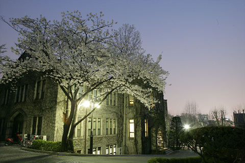 Yonsei night view